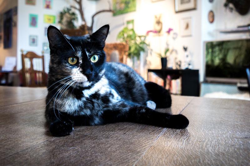 Purnauskis on Suomen ensimmäinen kissakahvila, jossa pääset nauttimaan kahvilan vakituisten kissojen rapsuttelusta ja laadukkaista kahvilatuotteista.